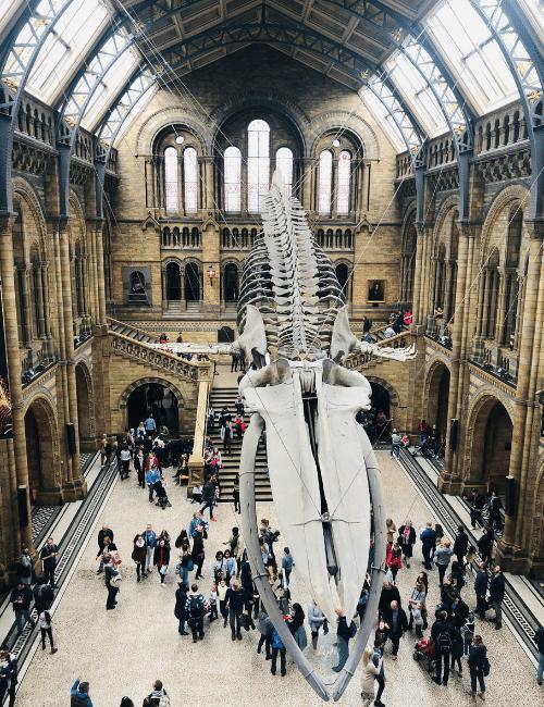 esqueleto ballena
